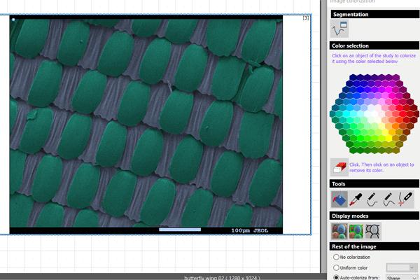 SEM image colorized using the MountainsSEM auto-colorization feature